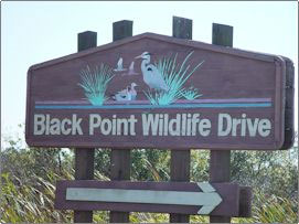 Black Point Wildlife Drive